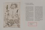 Plate #07: Toad Bladder by Stephen Burt and Pamela A. Morgan