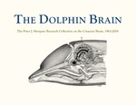 The Dolphin Brain - A Digital Presentation by Laura Taylor, Cally Gurley, Samia Pratt, and David Mokler