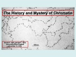 The History And Mystery Of Chromatin by Ada L. Olins and Donald E. Olins