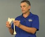 Upper Extremity Arthrokinematics: Shoulder Complex by R. Dennis Leighton