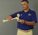 Lower Extremity Arthrokinematics: Hip