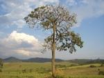 Tree by Steven Eric Byrd
