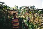 Coffee growing by Steven Eric Byrd