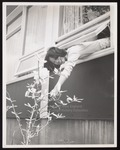 Student Sandra Yueh Leans Out of a Window, Linnell Hall, Westbrook Junior College, ca.1967